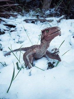 Velociraptor, Raptor, Dinosaur, Jurassic, Prehistoric