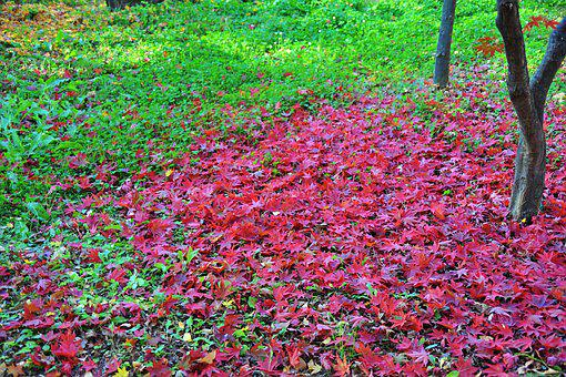 Autumn Leaves, Leaves, Red, The Leaves, Autumn, Wood