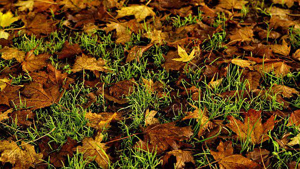Autumn, Background, Leaves, Colorful, Grass, Wet, Moist