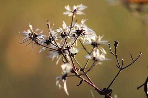 Nature, Plants, Uschnięta, Blurred Background, Delicate
