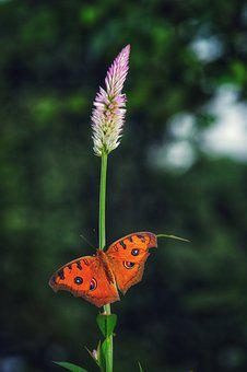 Insect, Flower, Butterfly, The Garden