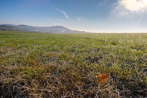 Grass, Meadow, Leaf, Leaves, Autumn, Frost, Hoarfrost