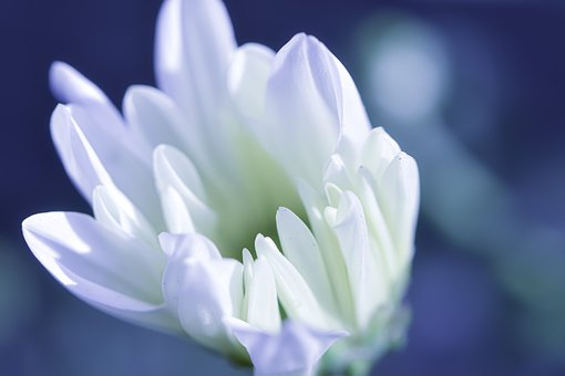 Postcard, Just Flower, Poetical, Wonder Of Nature