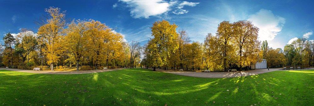 Grass, Forest, Garden, Walk, Relax, Yellow, Leaves