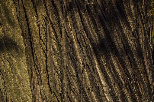Tree, Bark, Nature, Forest, Tribe, Wood, Log, Landscape