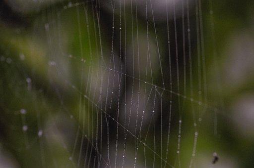Spiderweb, Cobweb, Bokeh, Web, Trap, Nature, Creepy