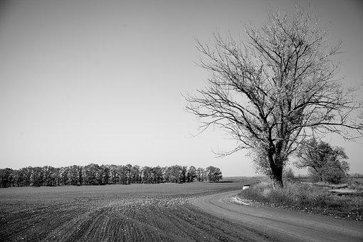 Nature, Field, Autumn, Black, White, Tosca, Retro