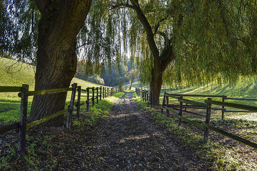 Landscape, Forest, Pasture, Fence, Trees, Nature, Green