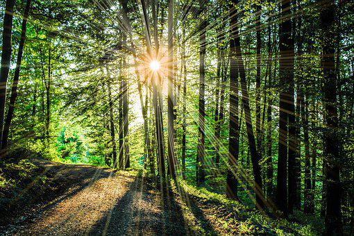Sun, Sunbeam, Light, Hell, Rays, Deciduous Forest
