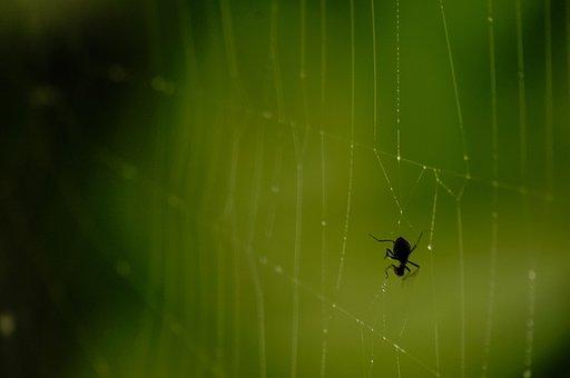 Spiderweb, Web, Cobweb, Spider, Trap, Nature, Insect