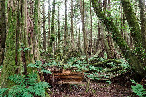 Forest, Trees, Nature, Landscape, Path, Fog, Mystical