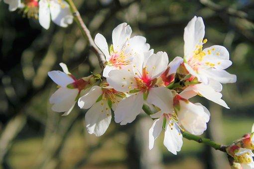 Flower, Nature, Spring, Plant, Pink, Leaves, Natural