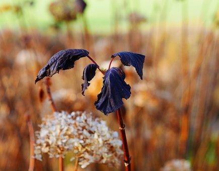 Plant, Flower, Nature, Close Up, Rotten, Black