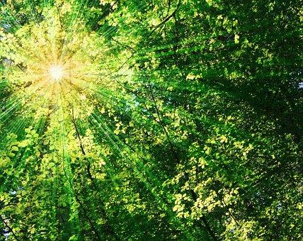 Sun, Sunbeam, Rays, Leaves, Spring, Summer, Sunlight