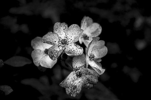 Flower, Natural, Nature, Plants, Spring, Summer, Garden