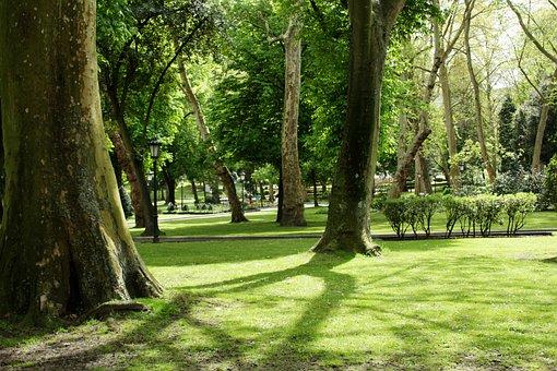 Park, Flashes, Nature, Landscape, Summer, Trees, Sun