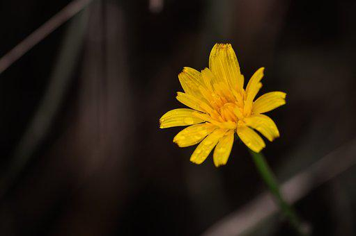 Flower, Single, Plant, Weed, Bloom, Water Drops, Nature