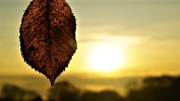 Background, Sunrise, Autumn, Frost, Dark, Cold, Weather