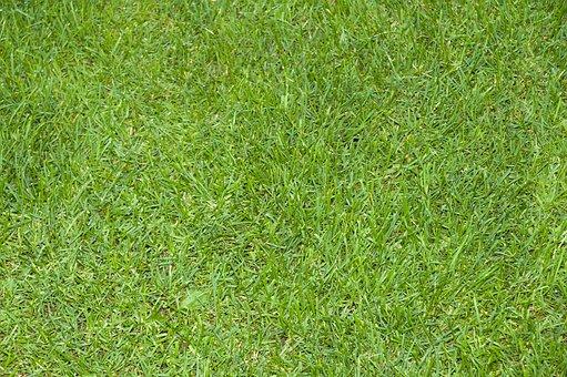 Grass, Green, Nature, Environment, Landscape, Pattern