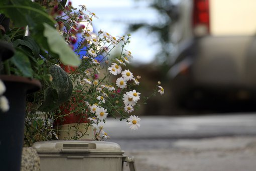 Street, Flowers, Potted Plant, Nature, Plants, Summer