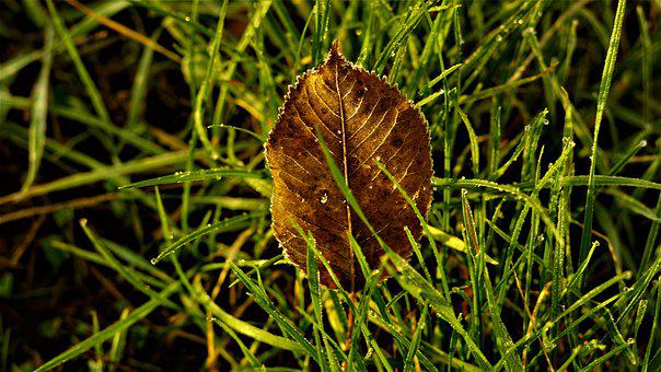 Background, Autumn, Leaf, Frost, Morning, Structure
