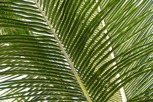 Nature, Tropical, Plants, Travel, Green, Leaves