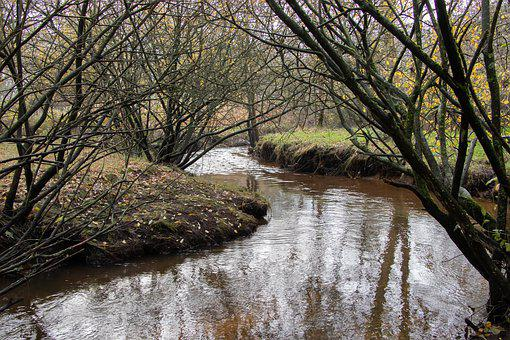 Brook, Streams, Water, Forest, Trees, Autumn, Esbjerg