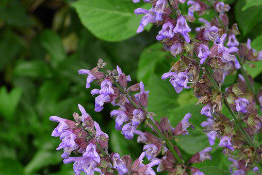 Flowers, Garden, Blossom, Bloom, Plant, Nature, Flora