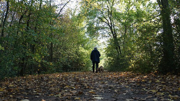 Background, Autumn, Walk In The Forest, Man, Dogs