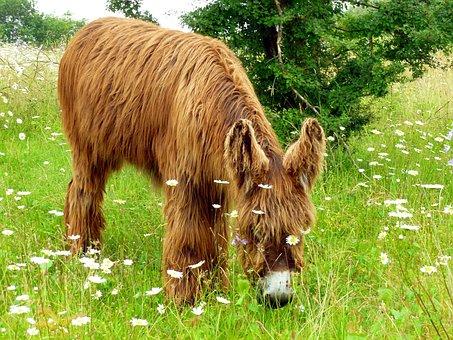 Donkey, Animal, Long Haired, Rural, Nature