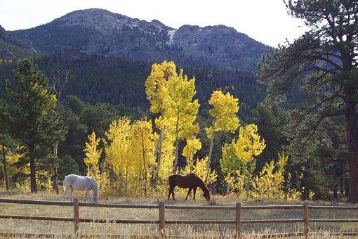 Horses, Aspen, Fence, Fall, Mountain, Pasture, Wood