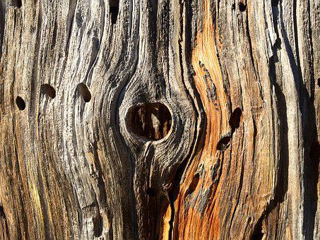 Wood, Trunk, Dry, Texture, Brown, Hole, Bark, Nature