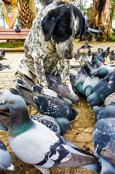 Dog, Pigeon, Animal, Bird, In Background, Day, Tree