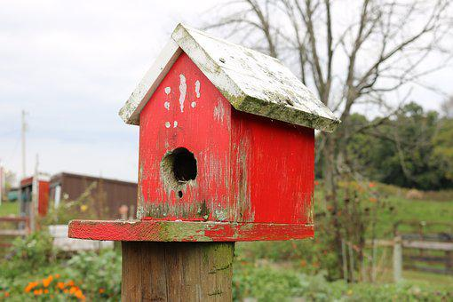 Bird, House, Birdhouse, Nature, Roof, Wooden, Colorful