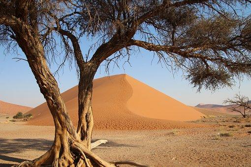 Tree Namibia, Desert, Africa, Safari, Nature, Drought