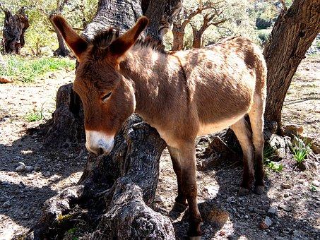 Donkey, Mallorca, Rocky, Free Running, Steinig