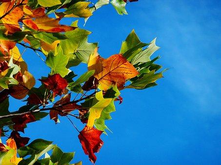 Autumn, Fall Leaves, Leaves, Fall Color, Leaf