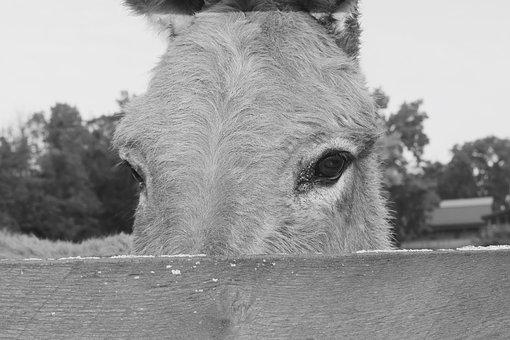 Donkey, Animal, Farm, Eyes, Farm Animals, Head, Fence