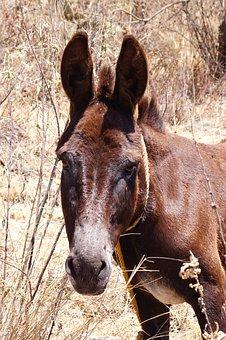 Donkey, Animal, Four Legged