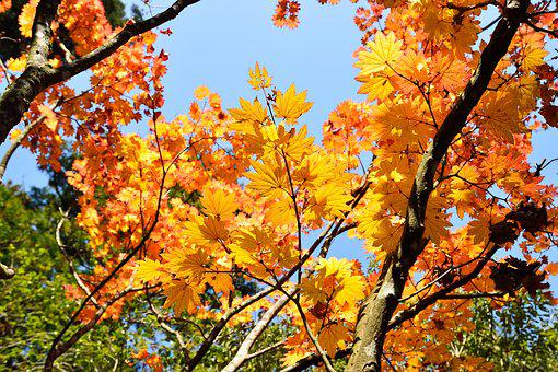 Japan, Autumn, Autumnal Leaves, Fall Of Japan