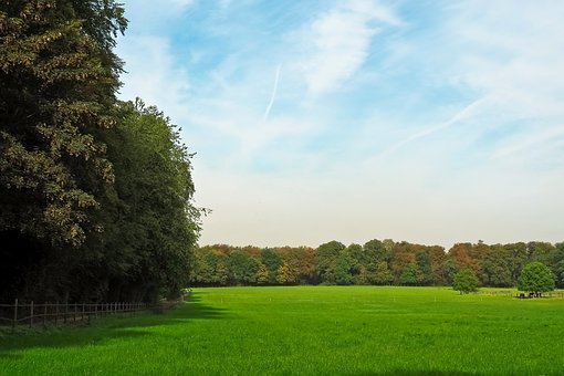 Landscape, Nature, Forest, Summer, Pasture, Lane