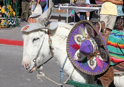Mexico Border Town, Mexico Tourist Burro, Nogales