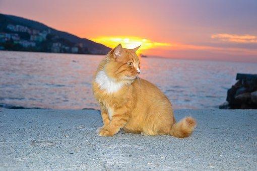 Cat, Cute, Park, Sweet, Animal Portrait, Pet, Pets