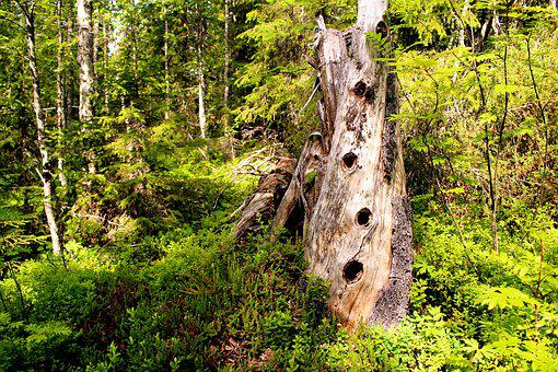 Tree, Collection, Rot, Forest, Hole, Nature