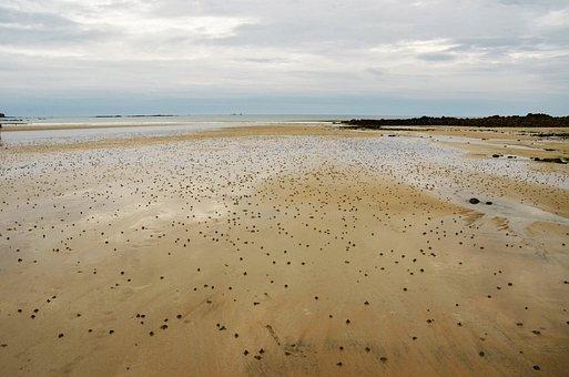 Beach, Sand, Eb, Tide, Coast, Ocean, Sea, Water, Verte
