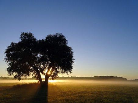 Sunrise, Ground Fog, Tree, Landscape, Morning