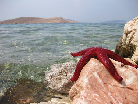 Starfish, Sea, Beach, Ocean, Water, Vacations