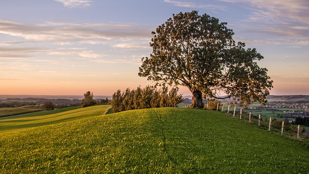 Tree, Hill, Grass, Wide, Rural, Fence, Sky, Sunset