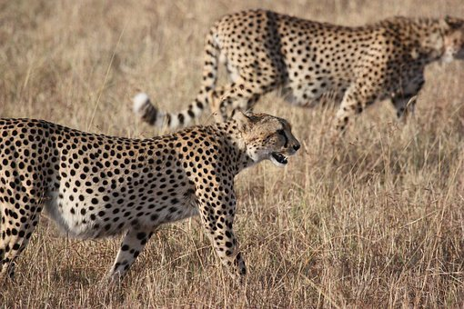 Africa, South Africa, Wild, Nature, Wildlife, Animals