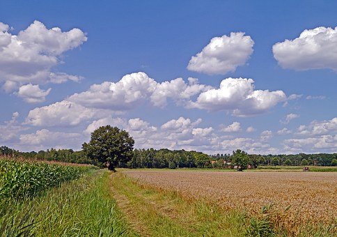 Summer Day, Land, Rural, Clouds, Arable, Cereals
